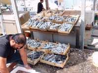 frischer Fisch am Hafen