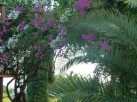 Vegetation im Feriendorf