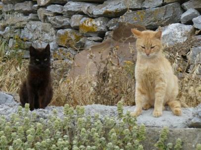 ständige Begleiter: griechische Katzen