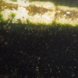 Rover im Muschelpelz